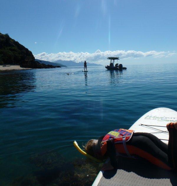 snapper island great barrier reef snorkeling