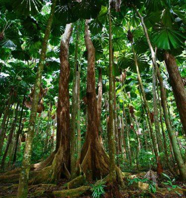 daintree tours cooper creek rainforest plants and animals