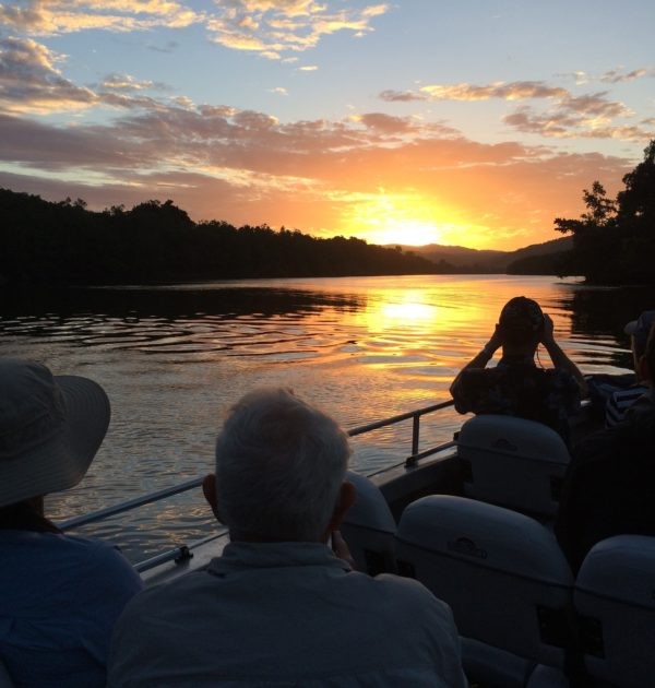 daintree river tours including birdwatching and croc spotting