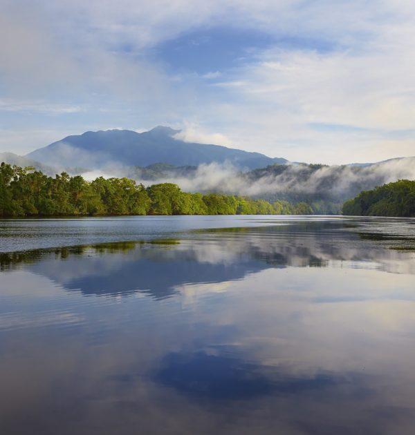 daintree rainforest tours including daintree river