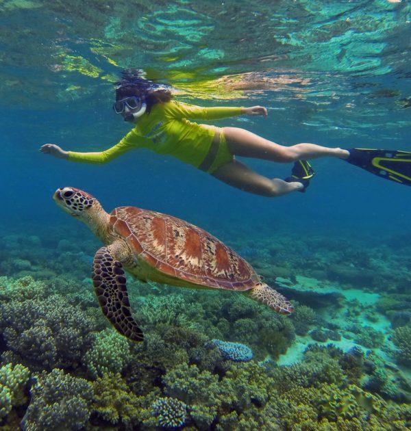 great barrier reef snorkeling daintree rainforest mackay cay