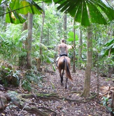 cape trib horse rides daintree rainforest beach