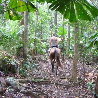 cape trib horse rides daintree rainforest beach